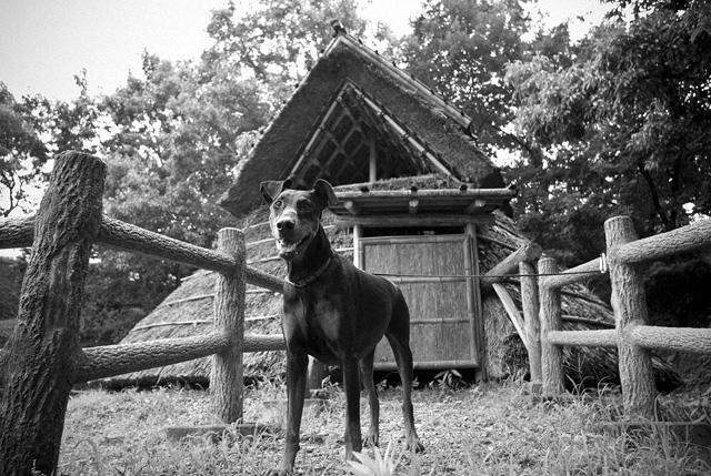 サラの犬小屋