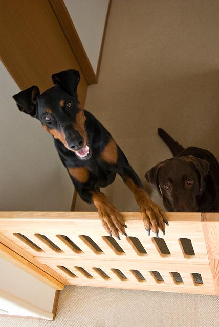 自作のペットゲートと犬達