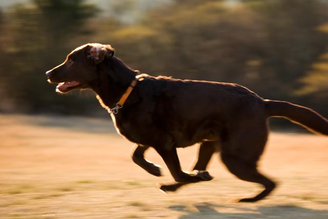 犬の流し撮り 1/180秒