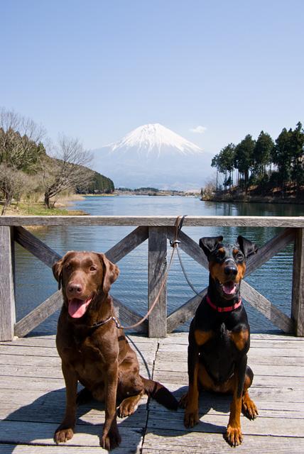 田貫湖でのりゅうとサラ