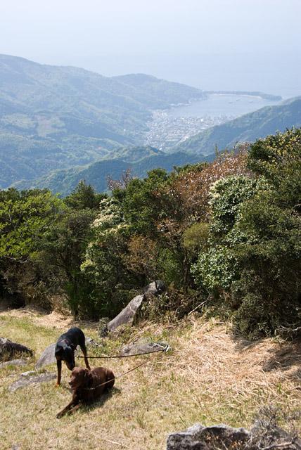 金冠山の山頂からの戸田港