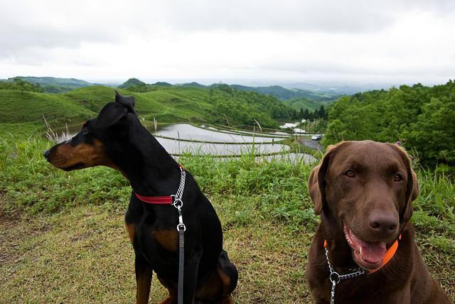 扇田と犬達