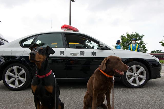 警察犬ですか?