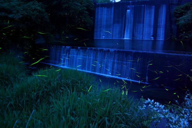 2009年6月10日伊豆市徳永のホタル