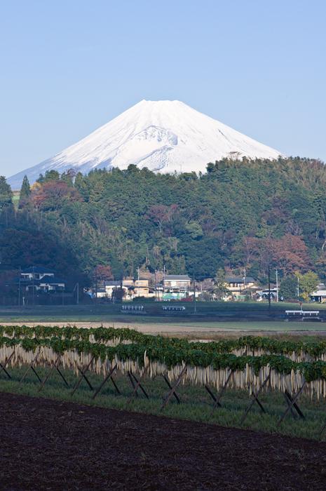 大根干しと富士山