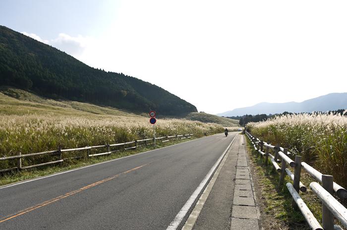 箱根仙石原のススキ