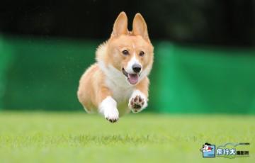 盲導犬チャリティー飛行犬撮影会