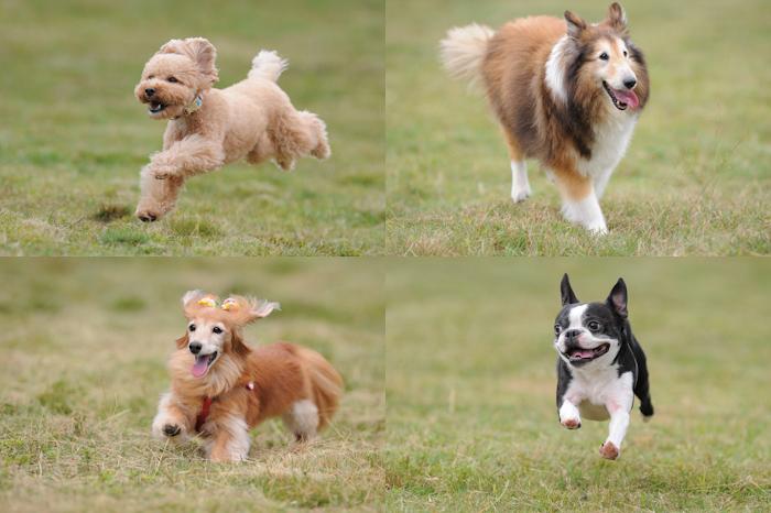 ビーナスライン飛行犬撮影会